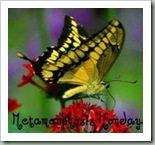 Between Naps on the Porch- Metamorphosis Monday
