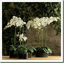 RH- orchids