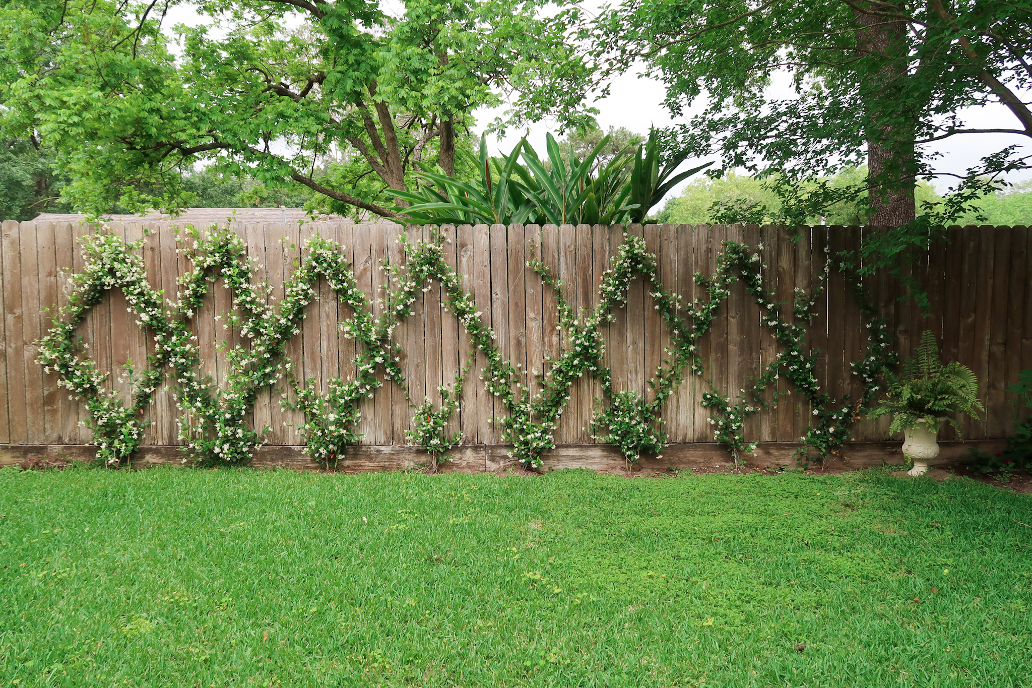 Star Jasmine Diamond Pattern